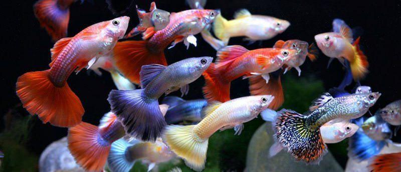 Сонник: к чему снятся аквариумные рыбки, ловить руками во сне, описание