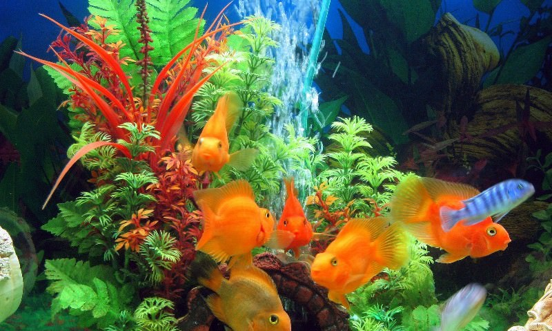 Видеть во сне аквариумных