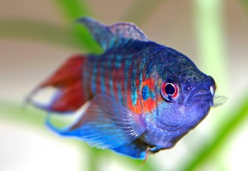 сонник золотые рыбы
