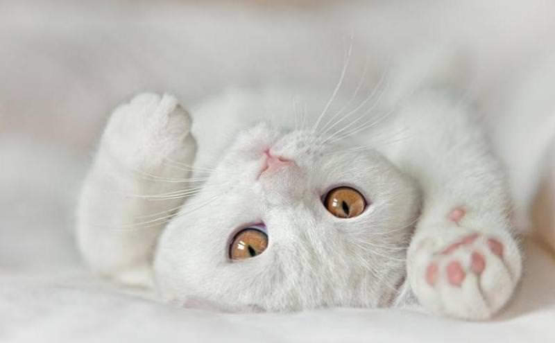 К чему снится белый кот мужчине и женщине