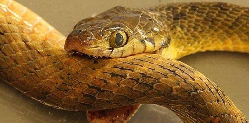 К чему снятся змеи девушке в доме
