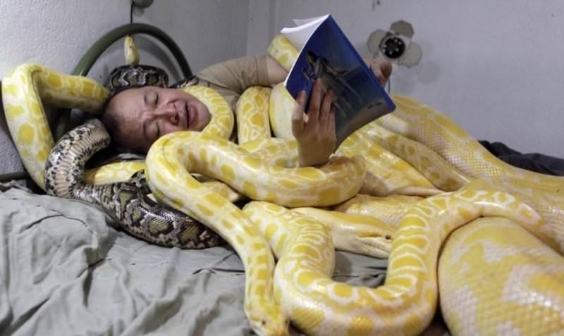 К чему снится большая змея? Сонник