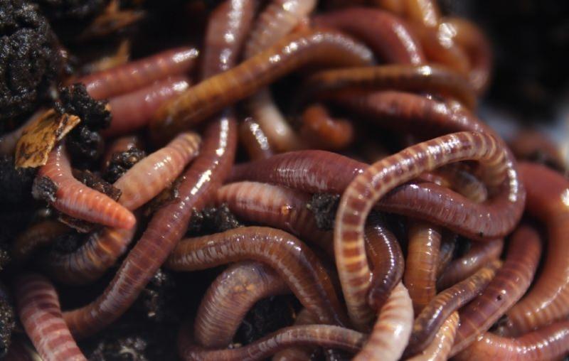 Что если снятся черви в теле