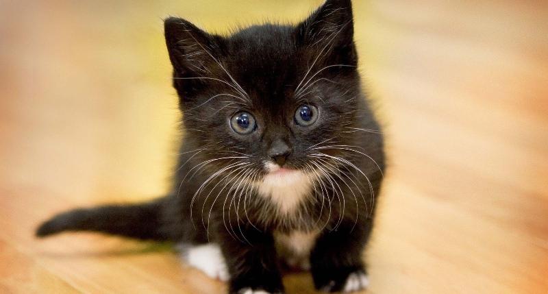 К чему снится кот огромный черный