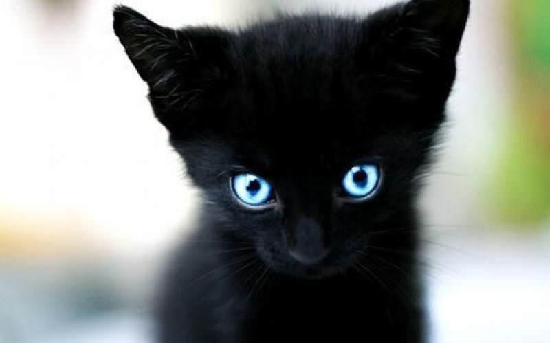 Сонник свой черный кот на руках