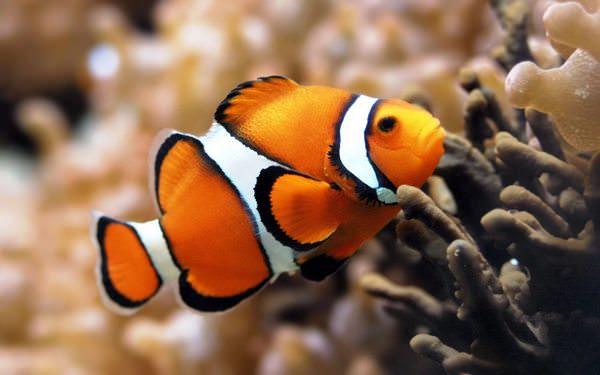 у чему снится живая рыба