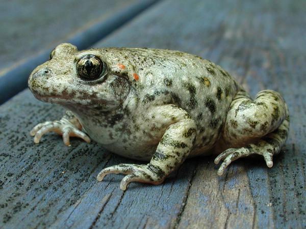 к чему снятся жабы на болоте