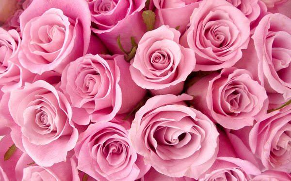 цветы в соннике