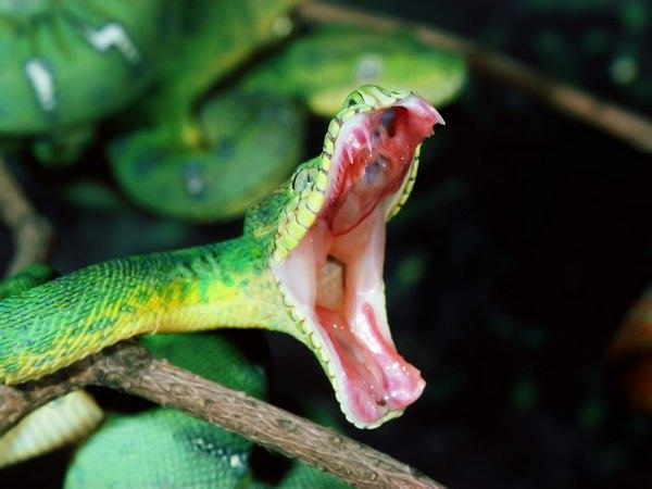 Ребенку снятся змеи