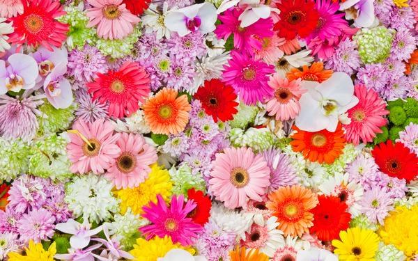 Приснилось живые цветы фото живые цветы