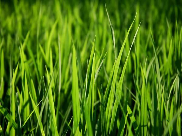 Во чему к кушать снится сне траву