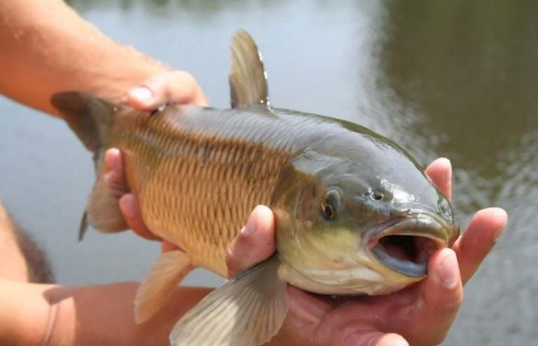 Если беременной снится много рыбы 33