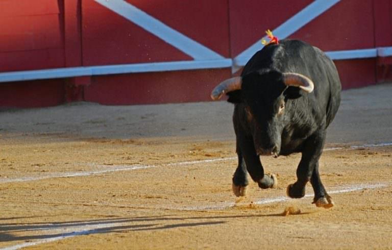 К чему снится бык светлый