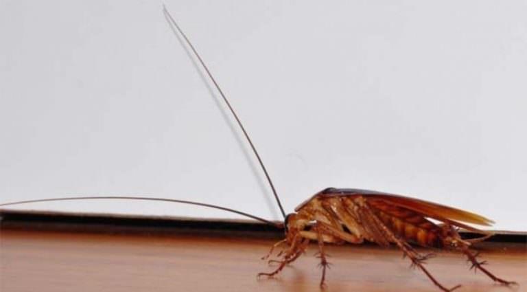 Беременный таракан во сне 99
