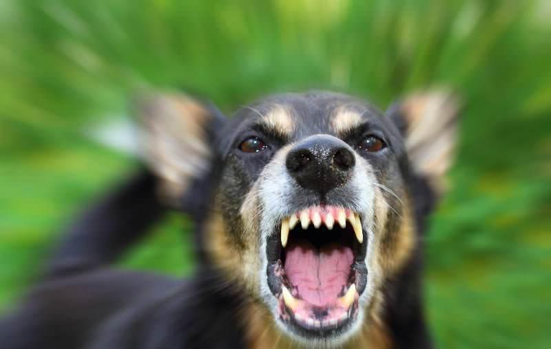 Картинки по запросу укус собаки