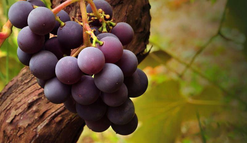 Половой член виноградины