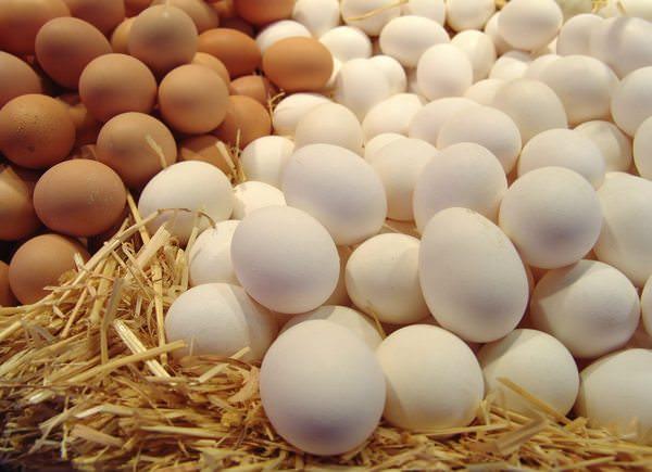 Хороший член хорошие яйца