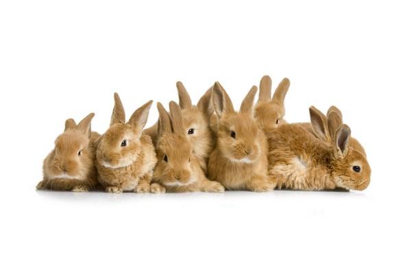 Видеть во сне кроликов или зайцев нет