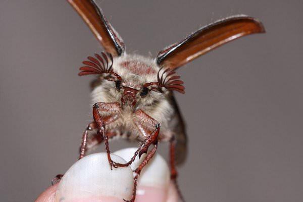 К чему снятся жуки: подробное толкование