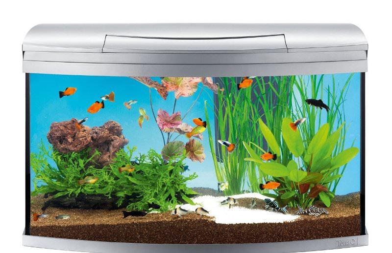 Толкование снов: к чему снится аквариум с рыбками