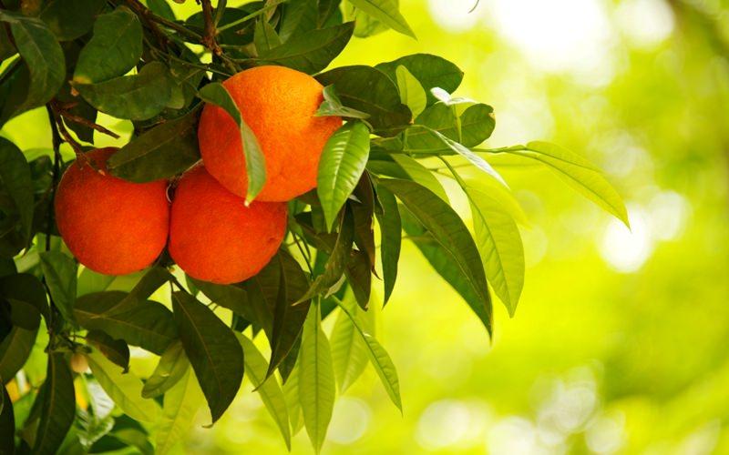 Толкование снов: к чему снятся апельсины