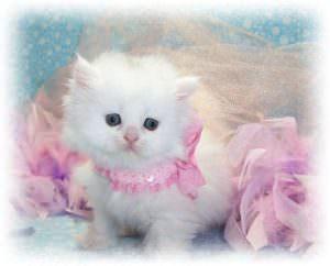Толкование снов: к чему снится белый котенок