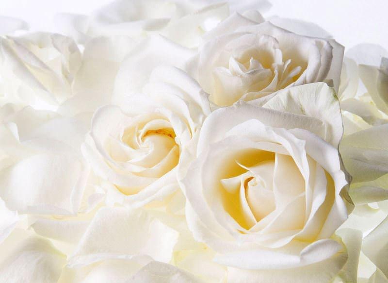 Видеть во сне желтые розы