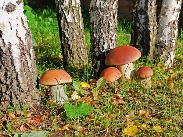 К чему снятся белые грибы: не пора ли в лес?