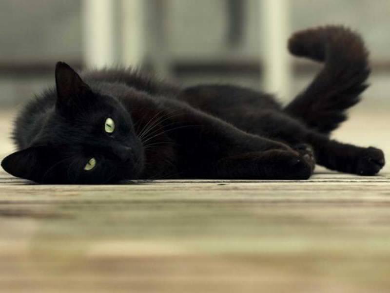 К чему снится кот который умирает