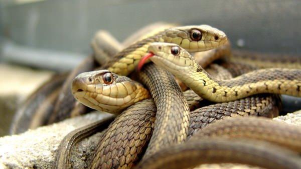 Снится много змей вокруг фото