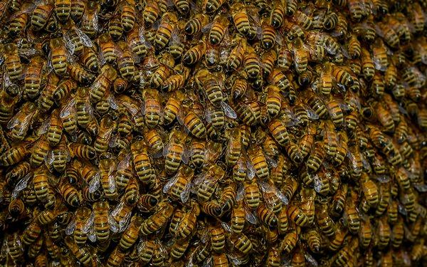 К чему снятся насекомые: толкования и предостережения