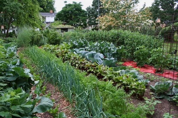 к чему снится огород