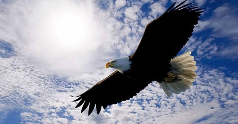 К чему может сниться орел?