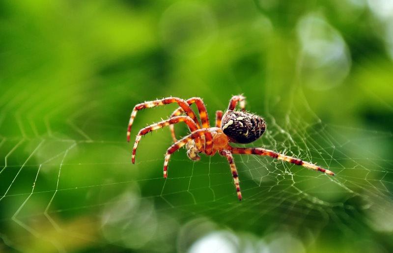 К чему обычно снятся пауки и паутина?