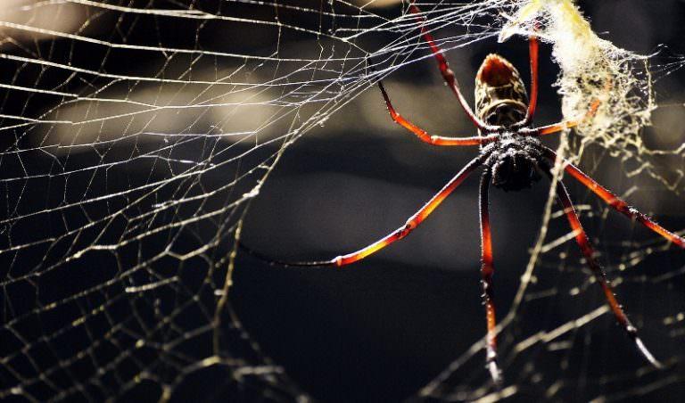 Снилось пауки плетут паутину