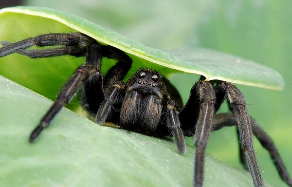К чему снятся пауки: подробные толкования