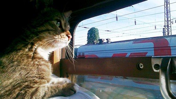 К чему снится поезд – не к долгой ли поездке?