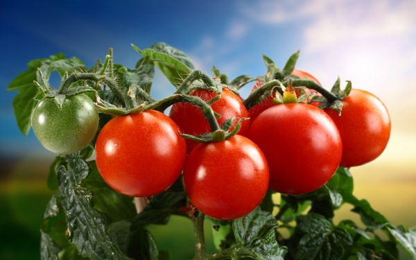 к чему снятся помидоры