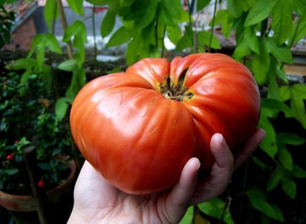 К чему снятся помидоры: верное толкование по деталям сна