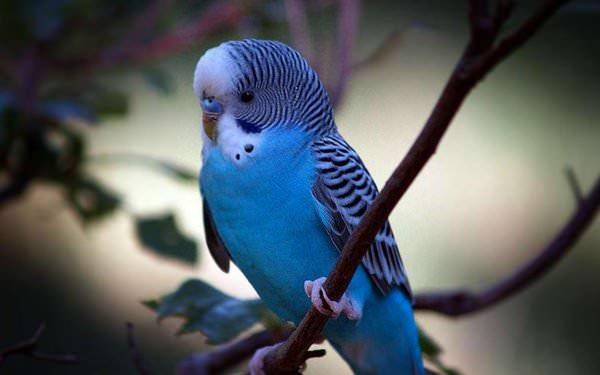 К чему снится попугай женщине: основные значения