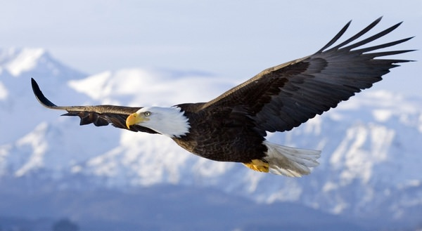 К чему снятся птицы: знаки и толкования
