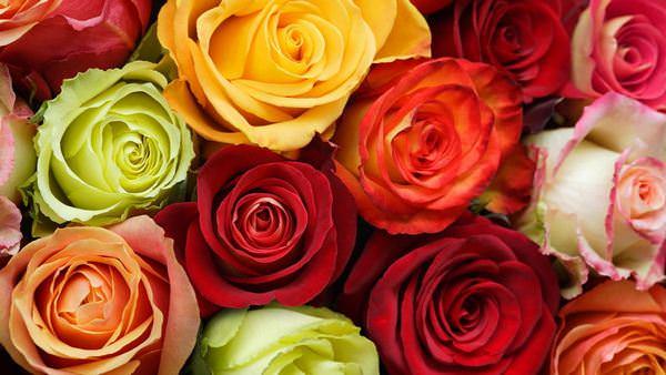 к чему снится одна белая подаренная роза