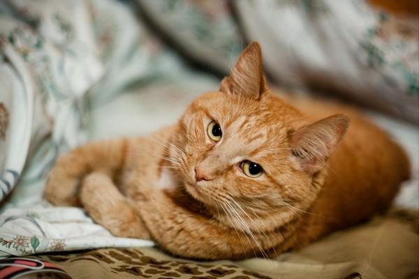 К чему снится кот мурлыкает