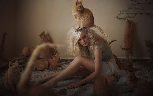 К чему снится рыжий котенок: пророческие толкования сонников