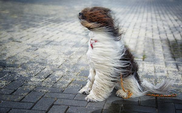 К чему снится сильный ветер и стоит ли бояться такого сна?