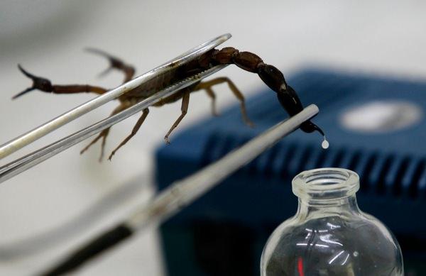 К чему снится скорпион: опасное предостережение или благоприятное известие?