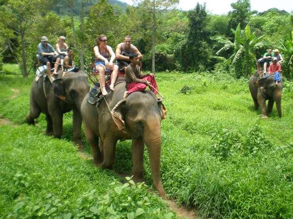 что значит если снятся слоны