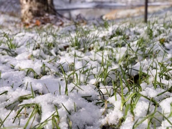 К чему снится снег: самые точные толкования