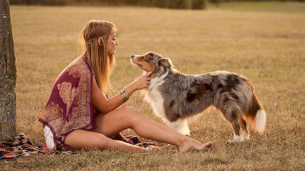 К чему снится собака: детали и их толкование