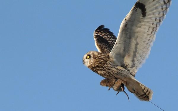 К чему снится сова: добрый знак или мрачный предвестник?